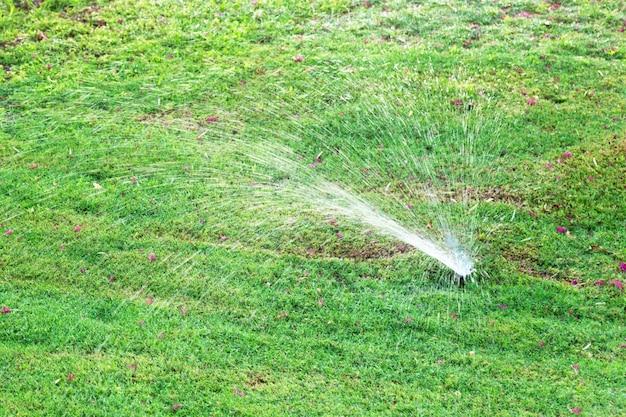 Zraszacz w ogrodzie podlewania trawnika