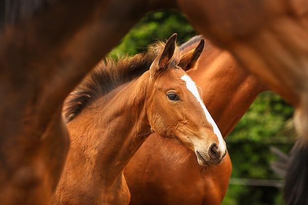 Źrebię otaczają dorosłe konie z bliska