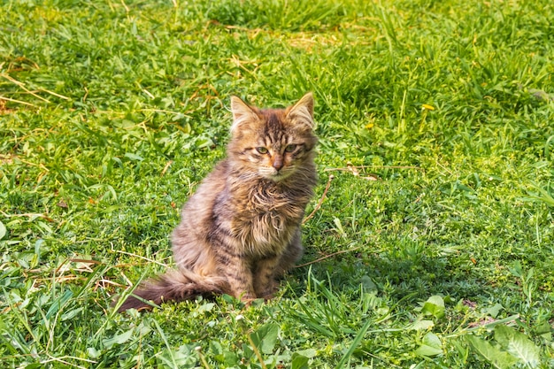 Zrelaksuj się kociak na zielonej trawie