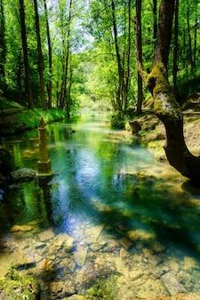 Źródło rzeki ebro w lesie zwanym fontibre. kantabria.