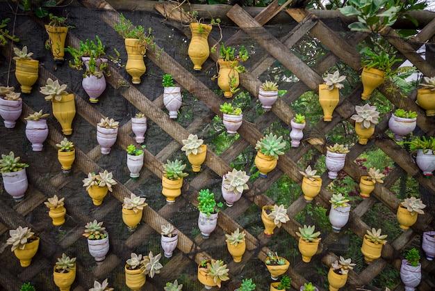 Zrównoważony rozwój, ponowne wykorzystanie butelek dla zwierząt domowych i przekształcenie ich w doniczki do sadzenia sukulentów,