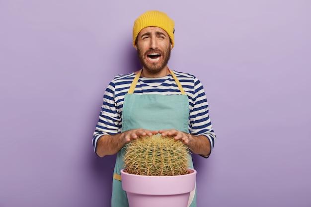 Zrozpaczony ponury mężczyzna dotyka kolczastego kaktusa, dba o roślinę w doniczce, nosi fartuch, odizolowany na fioletowym tle. kwiaciarnia jest zajęta i zdenerwowana