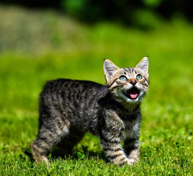Zszokowany kot w parku