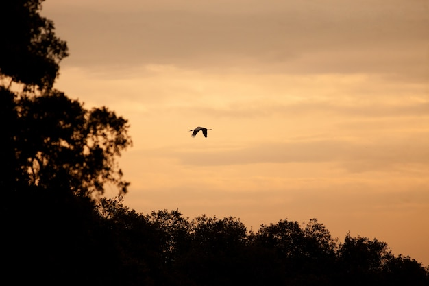 Żuraw latający