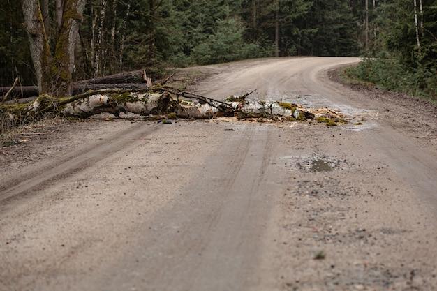 Zwalone drzewo blokujące wiejską drogę w lesie liściastym przed sezonem wiosennym