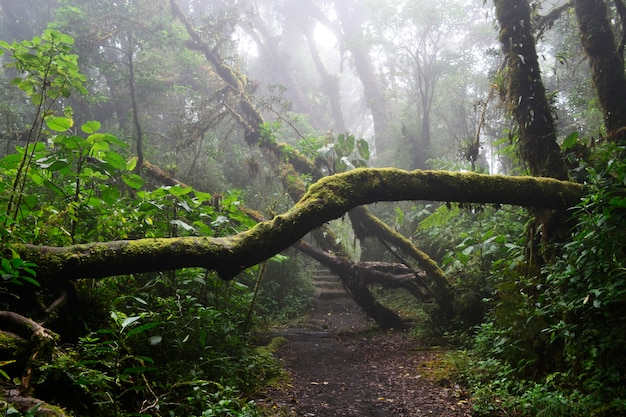 Zwalone drzewo cięcia drogi