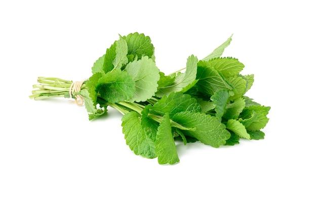 Związane łodygi świeżej mięty w pęczek na białym tle na białej powierzchni, zielone liście