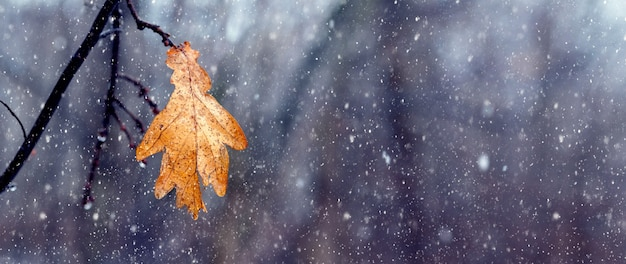 Zwiędły liść dębu w lesie na drzewie podczas opadów śniegu. samotny liść na drzewie wczesną zimą