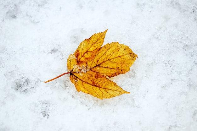 Zwiędły żółty liść na mokrym śniegu