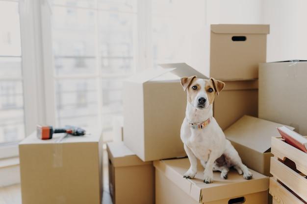 Zwierzę domowe siedzi na stosie kartonów i przenosi się w nowym miejscu