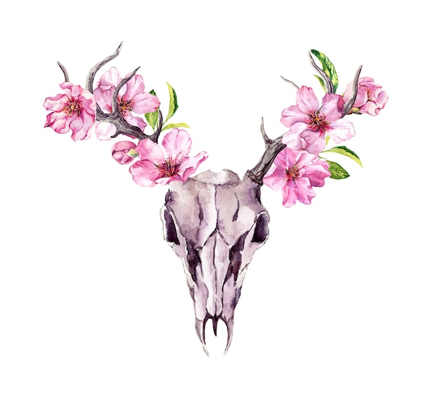 Zwierzęca czaszka jelenia z kwitnącymi różowymi kwiatami, kwiat wiśni. akwarela