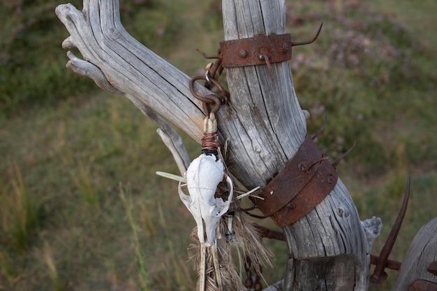 Zwierzęca czaszka wisząca na starym patyku
