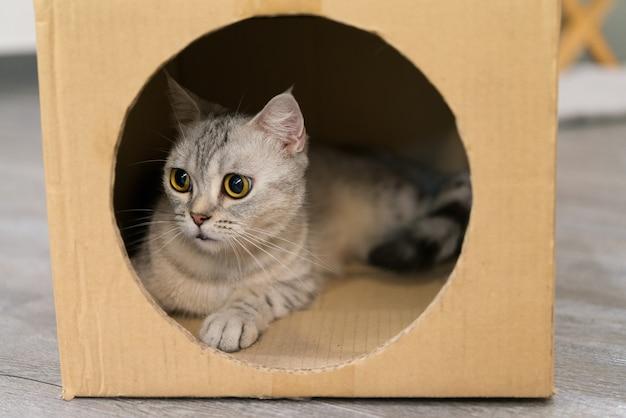 Zwierzęcy kot oczy tektura młody mały