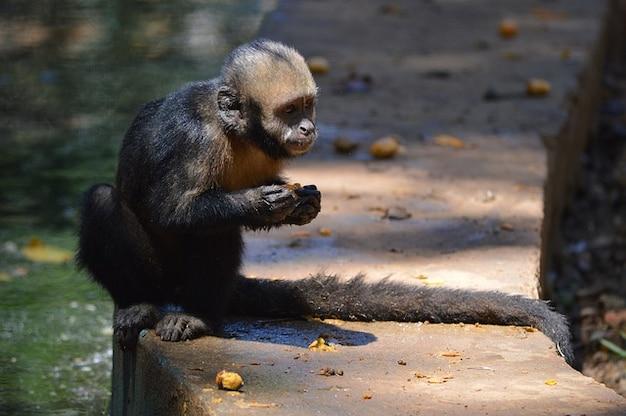 Zwierzęta małpa salvador bahia
