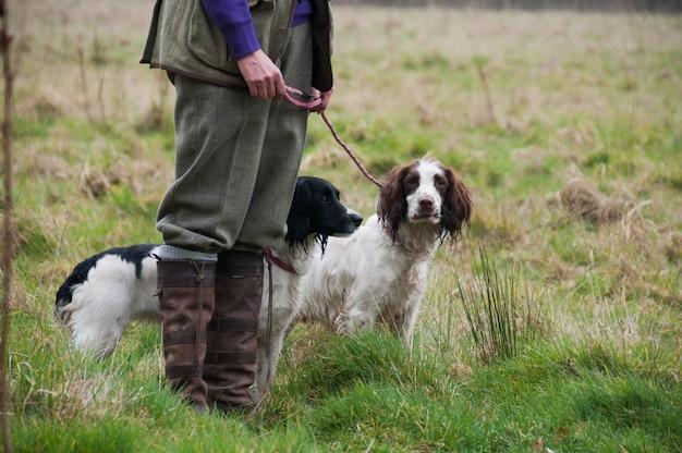 Zwierzęta prowadzą udomowione polowanie na mięsożerców