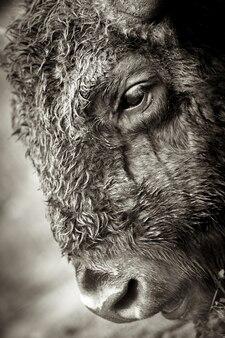 Zwierzęta w rezerwacie, danki, federacja rosyjska