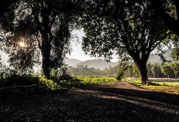Żwirowa droga przez drzewa