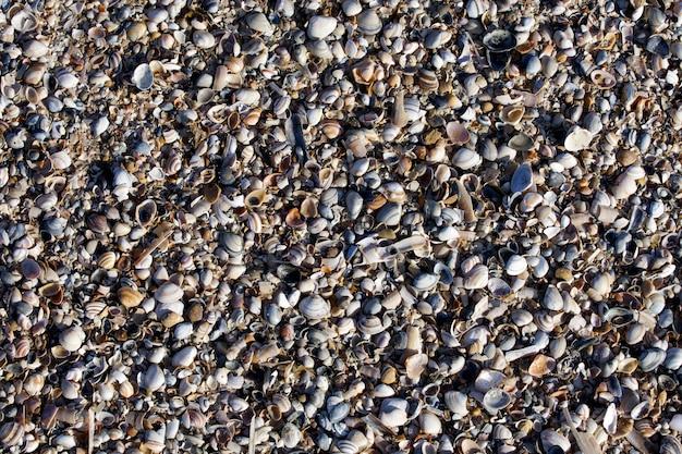 Żwirowa plażowa skorupy tło mały tekstura widok wiele piaska słońca biały błękitny światło