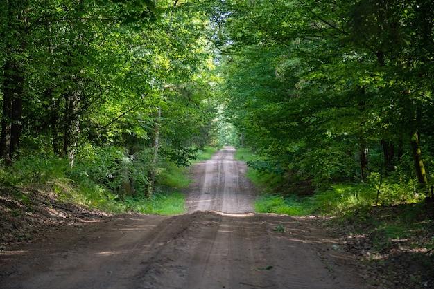 Żwirowo-piaskowa droga w sosnowym lesie, zmniejszająca się perspektywa ścieżki w lesie.