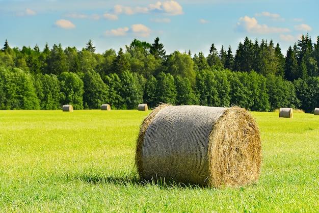 Zwoje siana na zielonej łące zasłoniły las i błękitne niebo.