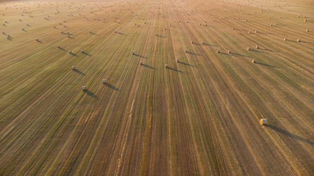 Zwoje słomy na polu rolniczym po zbiorze pszenicy
