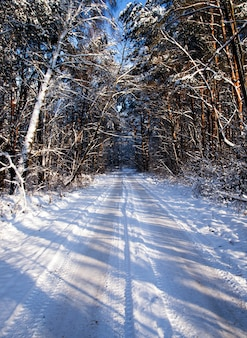Zwykła droga prowadząca przez las. sezon zimowy