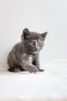 Zwykły mały szary kotek siedzący na białej puszystej tkaninie