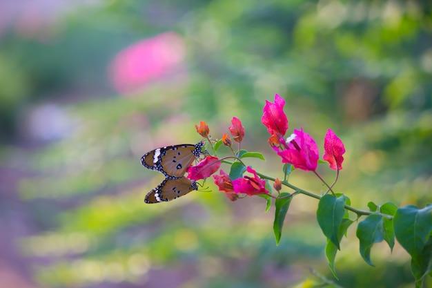 Zwykły tygrysi motyl
