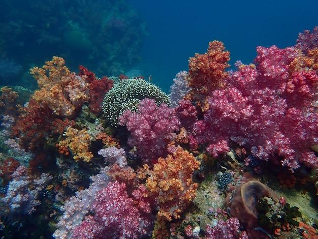 Życie morskie pod wodą morską