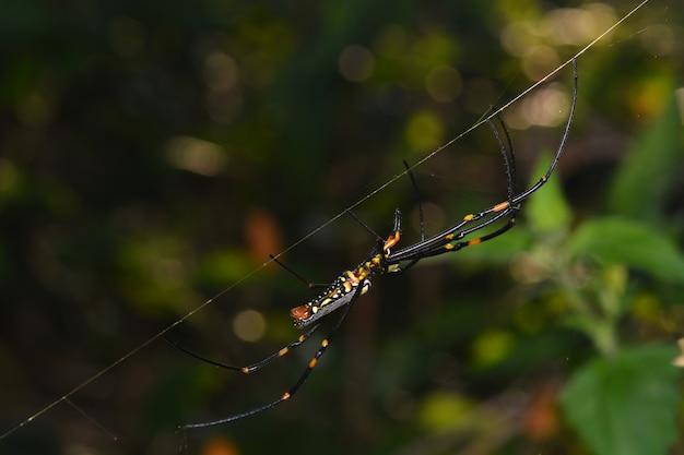 Życie w sieci i pająka w przyrodzie