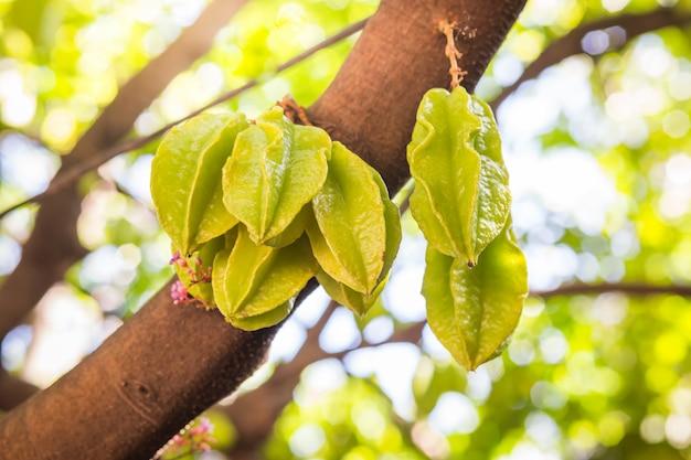 Żywa gwiazdowa jabłczana owoc na drzewie