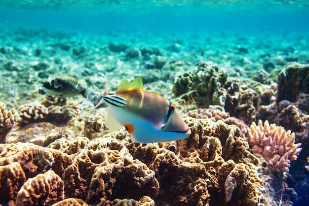 Żywa Rafa Koralowa W Morzu Czerwonym W Egipcie. Naturalne Niezwykłe Tło. Premium Zdjęcia