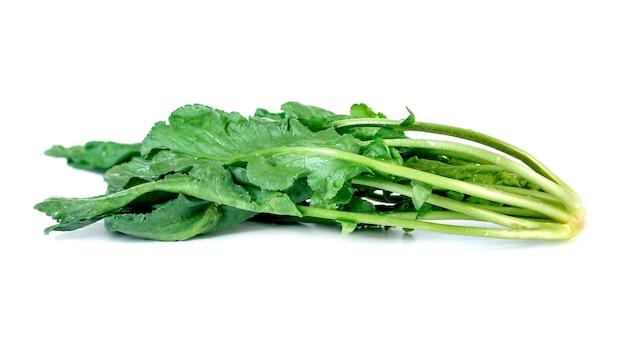 Żywa rzeżucha na białym tle, świeże warzywo.