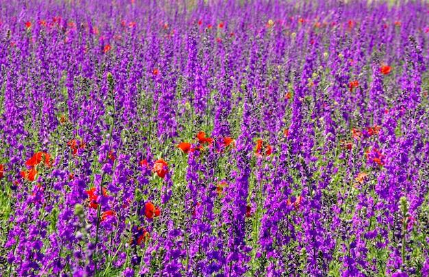 Żywe fioletowe kwiaty na łące w słoneczny dzień