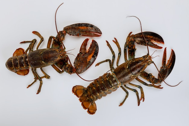 Żywe homary na białym tle na białej powierzchni