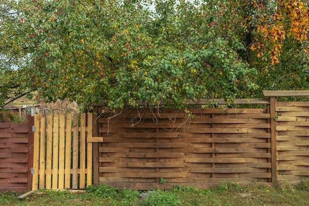 Żywe jesienne tło przyrody z pięknymi zielonymi i żółtymi liśćmi i czerwonymi małymi jabłkami jabłoni nad niezwykłym designerskim drewnianym ogrodzeniem z furtką. kolorowe tło natura z jesiennych liści.