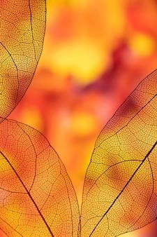 Żywe, kolorowe przezroczyste jesienne liście