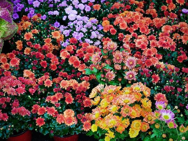 Żywe wielobarwne kwiaty
