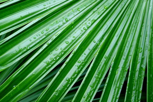 Żywe zielone liście palmowe z kroplami wody po deszczu w delikatnym świetle słonecznym