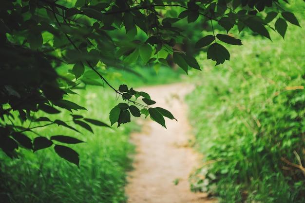 Żywi liście drzew na bokeh tle. bogata zieleń w słońcu z miejsca na kopię.