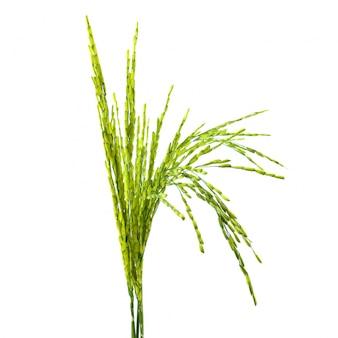 Żywności upraw zbóż żółtego latem