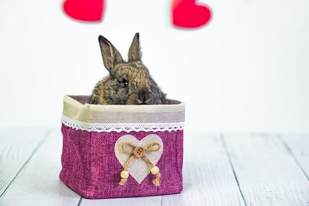 Żywy króliczek do koszyka z czerwonym sercem. kartka ze zwierzęciem na walentynki.