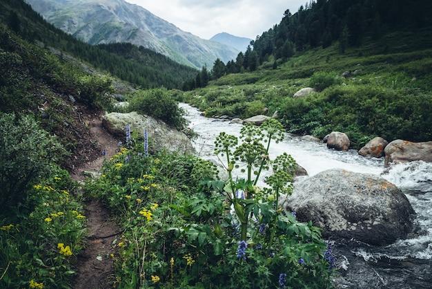 Żywy, piękny krajobraz z dzikimi zaroślami nad czystą wodą potężnej górskiej rzeki. kolorowa sceneria dzikiej roślinności nad przejrzystą wodą górskiego potoku. dzika flora gór.