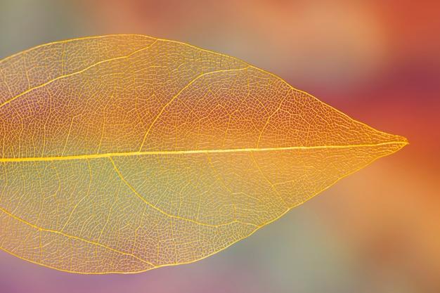 Żywy, przezroczysty pomarańczowy liść jesienią