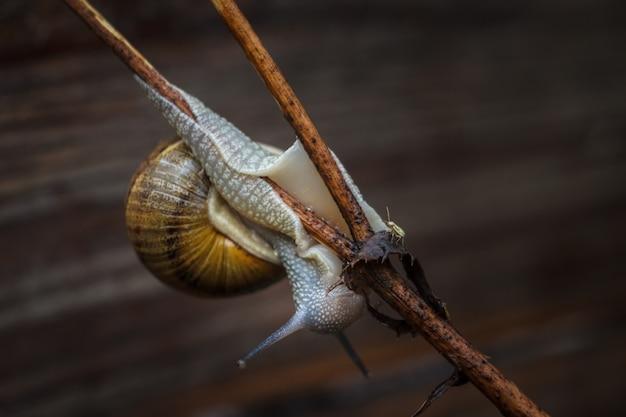 Żywy ślimak na wolności na wsi