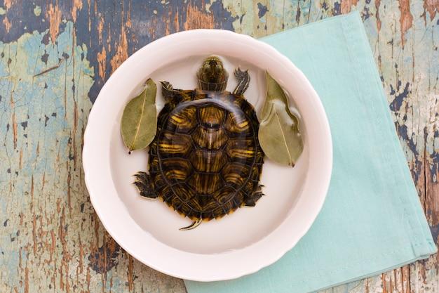 Żywy żółw w białym talerzu z wodą i liściem laurowym na stole. imitacja zupy żółwia. widok z góry