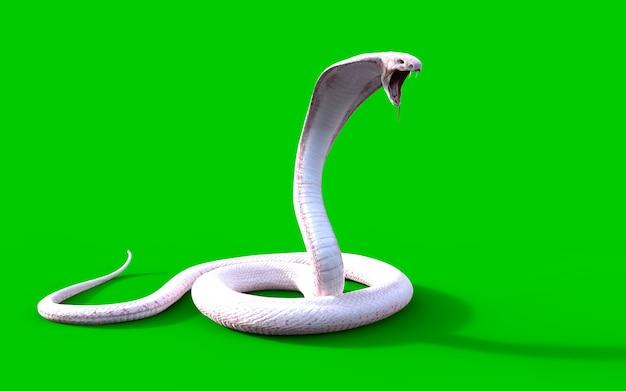 3d albino king cobra snake el veneno más largo del mundo