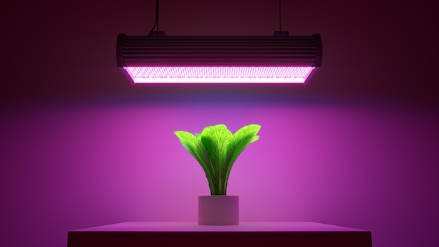 3d render planta verde en una maceta bajo luz led rosa