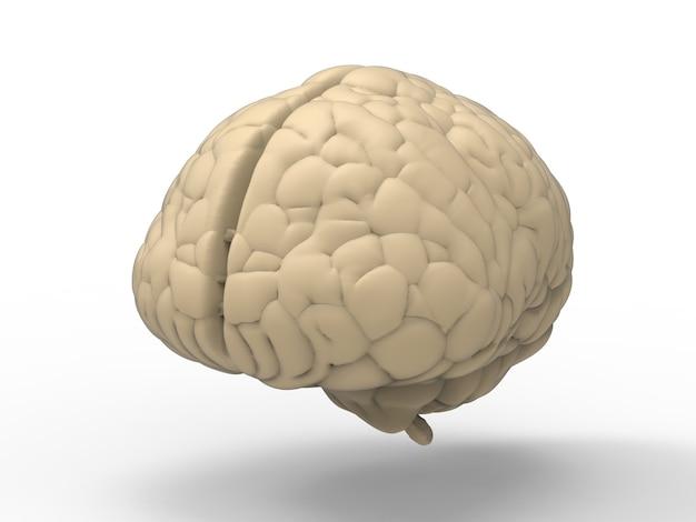 3d rendering cerebro blanco sobre fondo blanco.