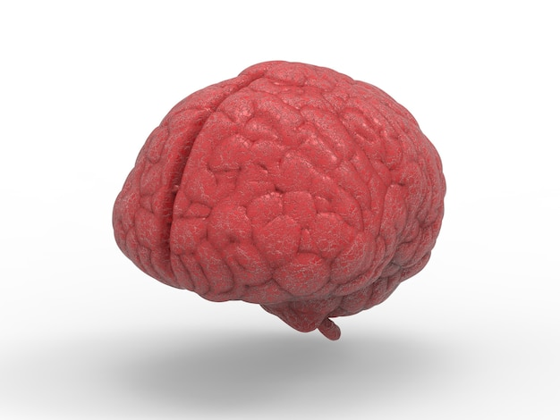 3d rendering cerebro rojo sobre fondo blanco.
